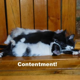 Contentment!