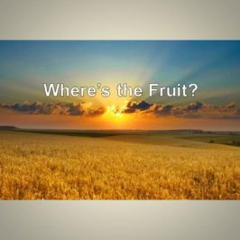 Where's the Fruit?